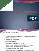 Clase Mammalia