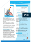 L1_Dumbo_factsheet.pdf