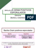 8. Bacilos Gram Positivos Esporulados