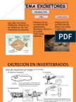APARATOS EXCRETORES Y RIÑON