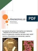 Haemophilus Pw