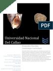 Informe Biologico Stramonita Chocolata; Concholepas Concholepas.docx