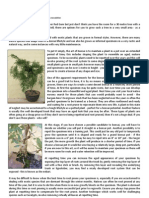 bonsai article kp newsletter for website