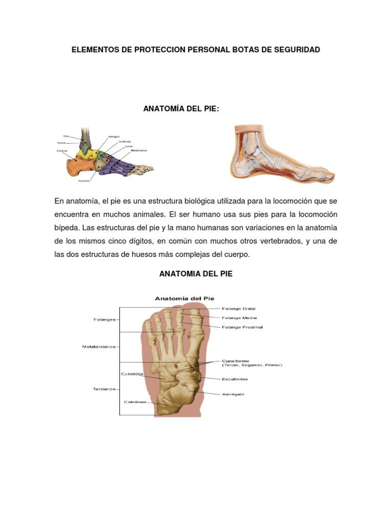 Fantástico Anatomía De Los Dedos Dígitos Bandera - Imágenes de ...