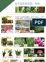 植物的繁殖