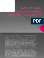 Tapping Panel Syndrome of the Rubber Tree