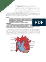 Anatomía,Fisiologia y Patologia Cardiacas