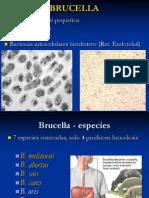 46241254-brucella