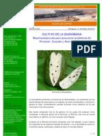 046 - 11.05.10 - Cultivo de la Guanábana.pdf