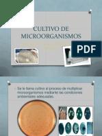 Cultivo de Microorganismos de Vidal
