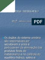 Slide-Sistema Urinario IV