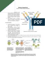 3ro Sistema Inmunitario