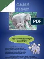 Pengenalan Gajah Pygmy