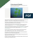 Algae Biofuel Investments Explode