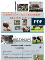 ATENCIÓN DEL TERNERO RECIÉN  NACIDO JJTS