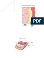 Microsoft PowerPoint - Arteries_physiology