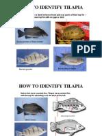 Tilapia ID Info