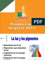 2 fotosintesis Luz y clorofila 2011.ppt