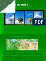 Recursos Forestales Parte 1 (1)
