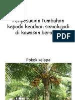 Penyesuaian Tumbuhan Kepada Keadaan Semulajadi Di Kawasan Berangin