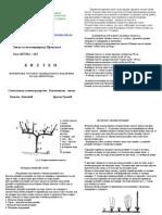 Formiranje Uzgojnog Oblika Kod Novih Zasada Vinograda