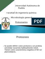 Micro Gral Protozoarios