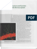Chapter 2_ Structure and Function of the Nervous System