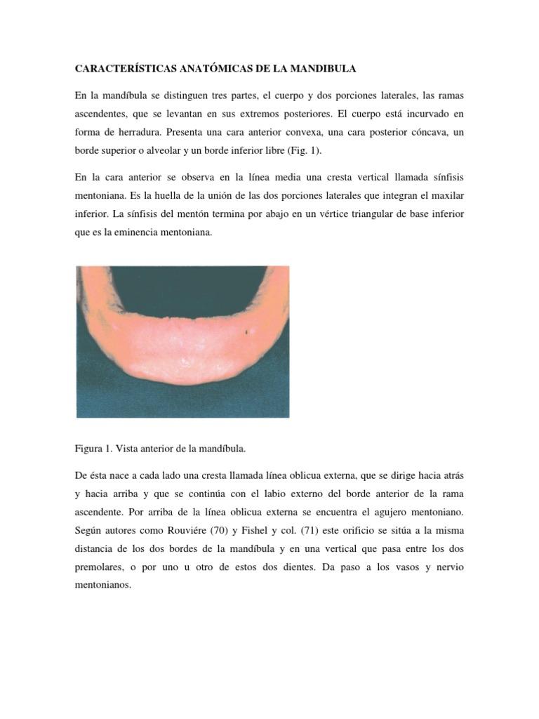 CARACTERÍSTICAS ANATÓMICAS DE LA MANDIBULA
