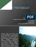 Valea TROTUSULUIAmbarus