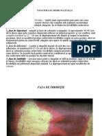 Medicina Legala (PowerPoint)