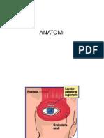 Anat Palpebra