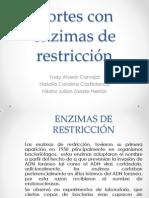 Cortes con enzimas de restricción Biologia.pptx