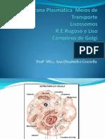 Aula 3 Membrana Plasmática Transporte RE Golgi Lisossomos