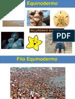08 - Aula Equinodermos