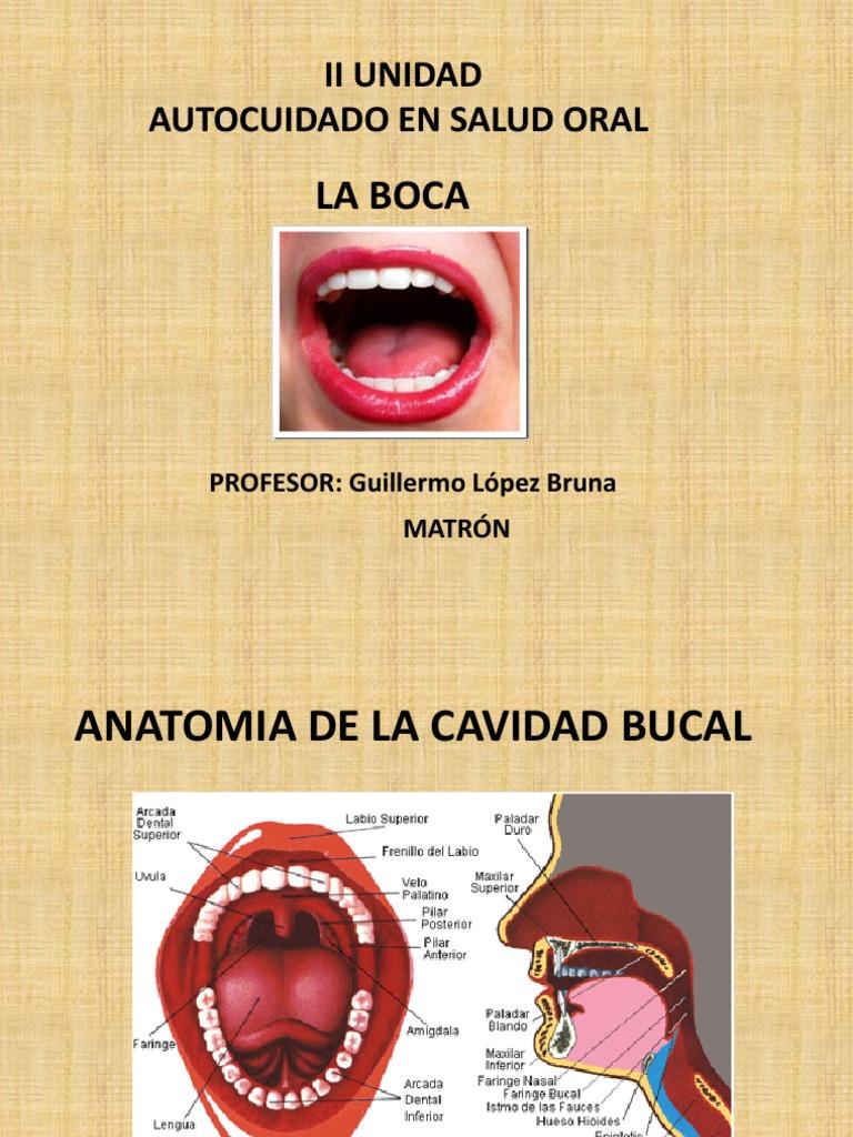 Anatomia de l Cavida Bucal