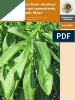 El cultivo de Stevia (Stevia rebauidiana) Nayarit, México