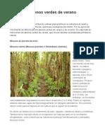 Abonos verdes de verano _ Agromeat.pdf