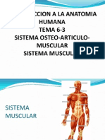 6-3-SISTEMA OSTEOARTICULO-MUSCULAR-MUSCULO.ppt