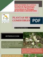 Plantas Silvestres Comestibles de Mexico