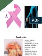 1.2. Cancer de Mama