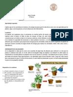 guía la fotosíntesis