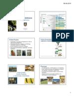 106 Poaceae 2013