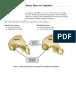 Skeleton Male or Female