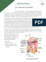 Tema 11-Bloque II-La Piel. Estructura y Funciones