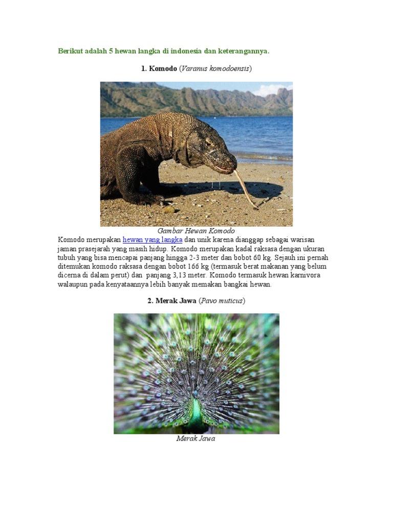 720 Koleksi Gambar Hewan Dan Tumbuhan Langka Beserta Penjelasanya Gratis Terbaik
