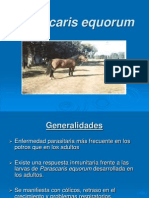 parascaris_equorum (1)