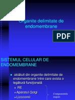 LP 7 - Org Delimitate