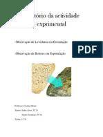 Relatório da actividade experimental