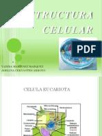 exposición microbiologia cap.2 estructura celular