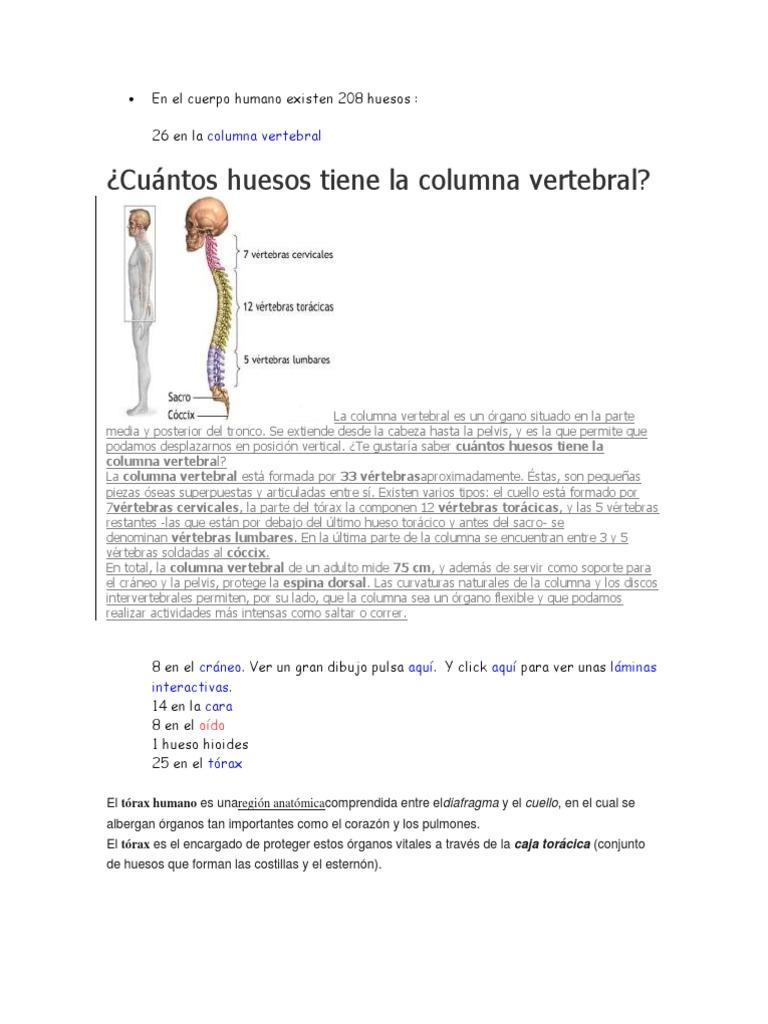 En El Cuerpo Humano Existen 208 Huesos